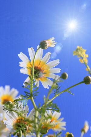 shine: Shine flower