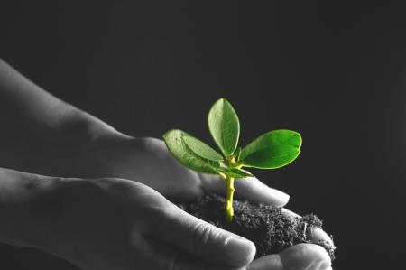 grow: Nurturing new life