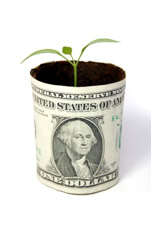 thrive: New seedling growing from a one dollar note