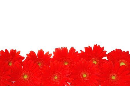 Flower border Stock Photo - 6824400