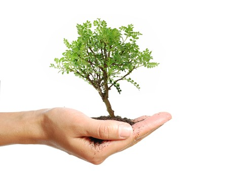 hand tree: Small bonsai tree