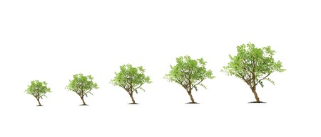 Tree evolution photo