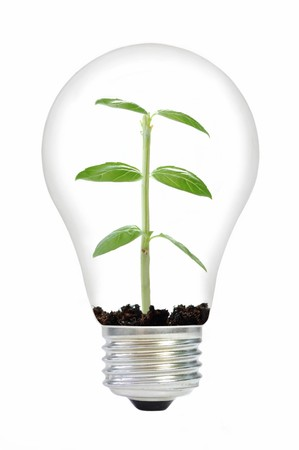 Plant in a light bulb photo
