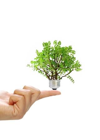 eco friendly: Eco concept Stock Photo