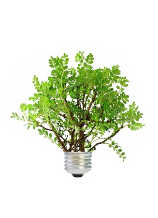 Eco concept Stock Photo - 7973334