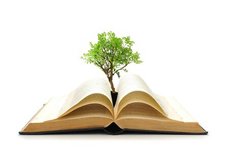 Tree growing from a book Stock Photo - 8031057