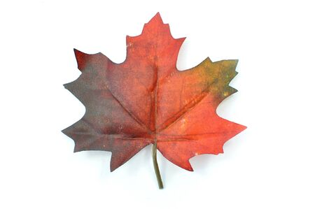seaonal: Autumn leaf