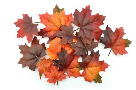 seaonal: Autumn leaves