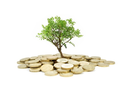 pound coin: Tree growing from money