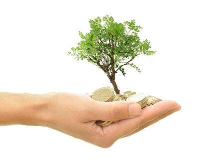 錢: 金錢樹生長