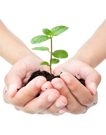 Hand holding plant  photo