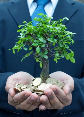pounds money: �rbol en manos de un empresario Foto de archivo