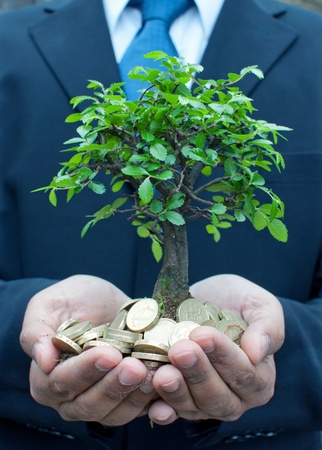 money tree: Tree in the hands of a businessman