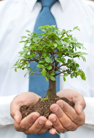 hand holding plant: Businessman holding a tree