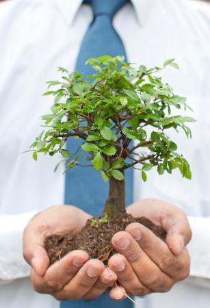 planta con raiz: Empresario de la celebraci�n de un �rbol