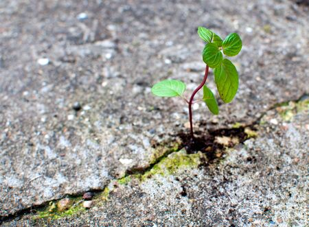 New life growing from concrete  photo
