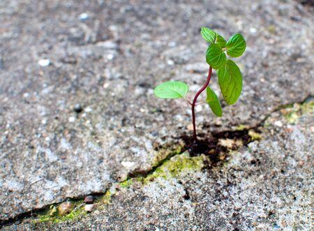 exito: Nueva vida que crece de hormig�n