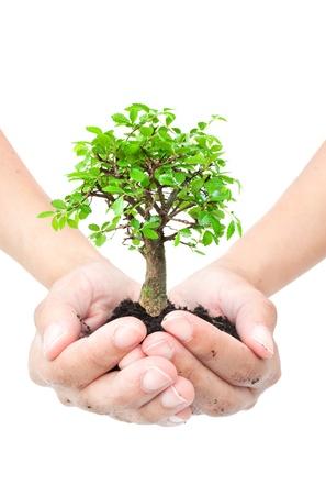 boom wortels: Kleine boom in handen Stockfoto