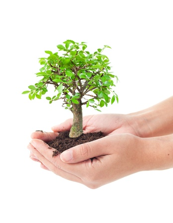 small plant: Tree in hands