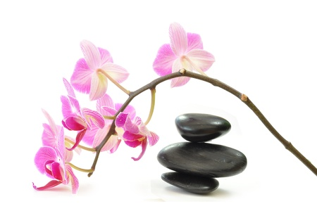 Orchid and zen stones  photo