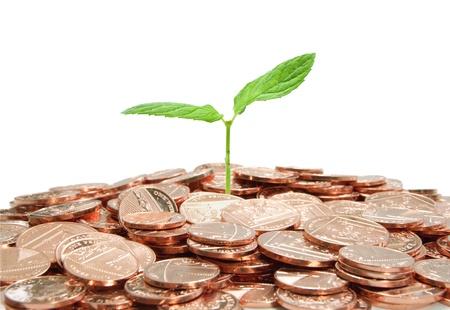 nestegg: Plant and coins  Stock Photo
