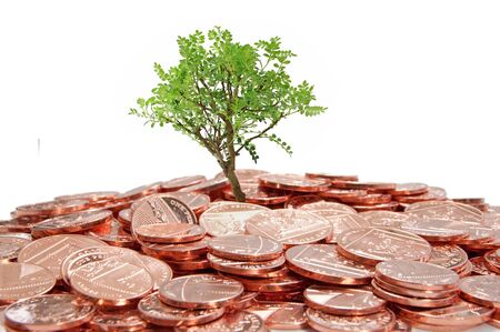 Small tree growing from money Stock Photo - 13537009