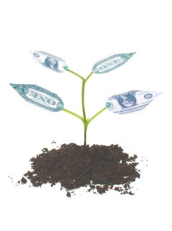 ganancias: El dinero de plantas Foto de archivo