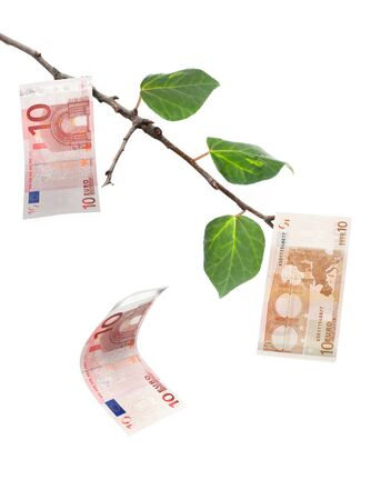 pulling money: Euro money tree  Stock Photo