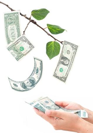 tree growing: Money tree  Stock Photo
