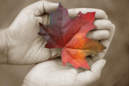 seaonal: Autumn