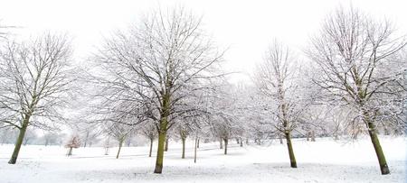 Winter snow Stock Photo - 16401319