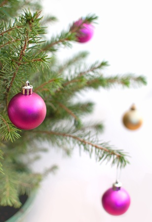 Christmas tree Stock Photo - 16401322