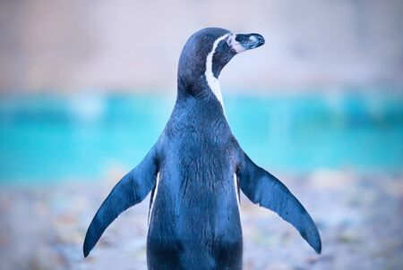 Penguin  Stock Photo - 16492230