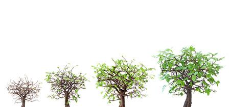 木の進化 写真素材