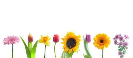 borde de flores: Flores de primavera en una fila