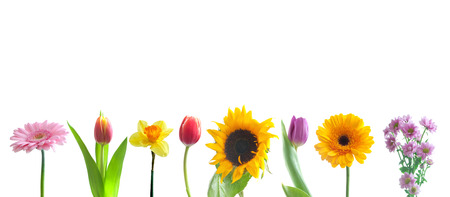 Spring flowers in a row Stock Photo - 38204934