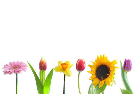 Spring flowers border over a white background photo