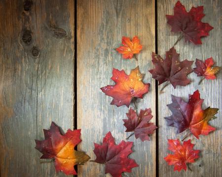 hojas antiguas: Hojas de otoño en la madera vieja