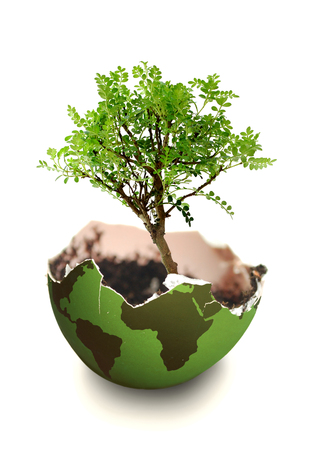Tree growing from a atlas map in the shape of an egg