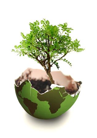 arbol de la vida: Árbol que crece de un mapa del atlas en la forma de un huevo Foto de archivo