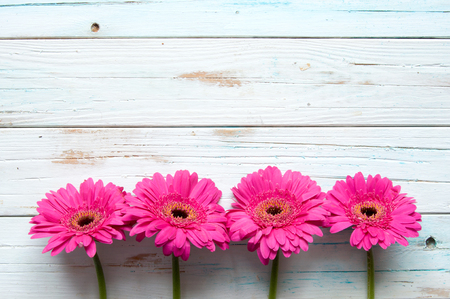 daisies: Pink daisies on a wooden backdrop with space
