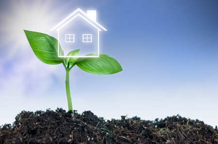 new plant: Real estate property concept