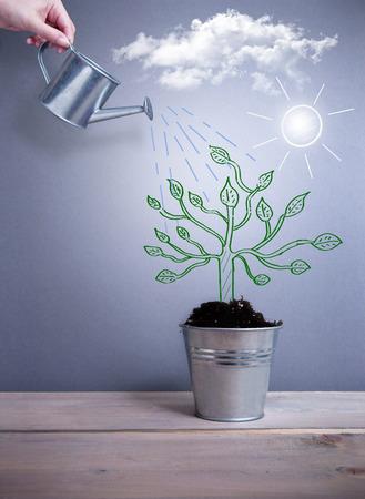 pot plant: Tree growth concept