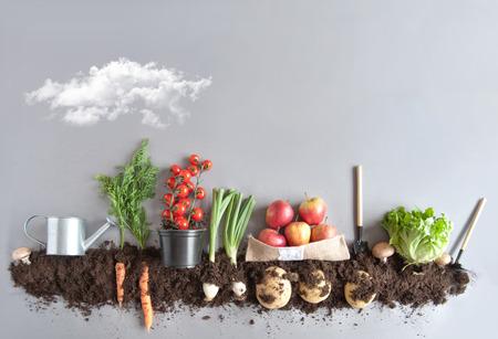 Groenten en fruit die in compost groeien, waaronder wortelen, champignons, aardappelen en sla Stockfoto