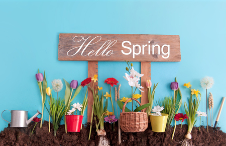 Spring flowers planted in earth on a blue paper background with hello spring sign post Standard-Bild - 119056726