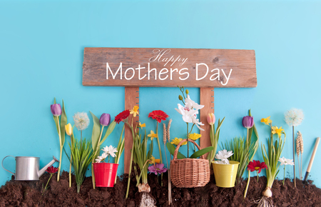 Spring flowers planted in earth on a blue paper background with happy mothers day sign post Standard-Bild - 119056727