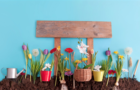 Spring flowers planted in earth on a blue paper background with sign post Standard-Bild - 119056730