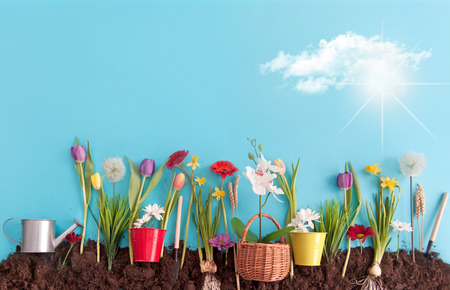 Spring flowers planted in earth on a blue paper background Standard-Bild - 119056733
