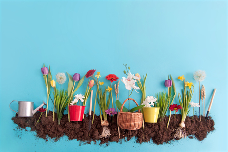 Spring flowers planted in earth on a blue paper background Standard-Bild - 119056735