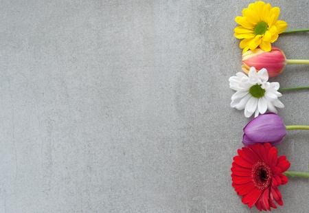 Assorted spring flowers border on grey stone background Standard-Bild - 119056738